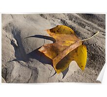Tulip Tree Leaf - Shadow and Light Poster