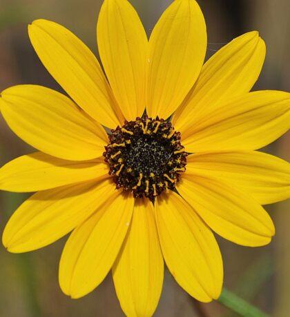 Wild Sunflower Sticker