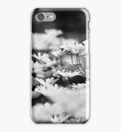 Daisies Galore! iPhone Case/Skin
