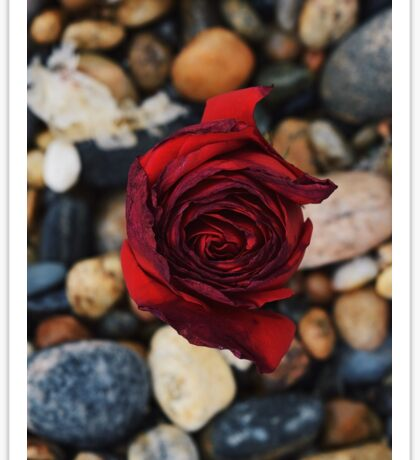 a rose by any other name Sticker