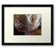 kitty nose Framed Print