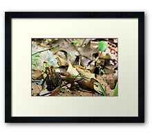 Travelling Buddy Framed Print