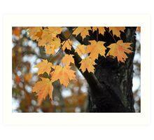 Hanging on to Autumn Art Print