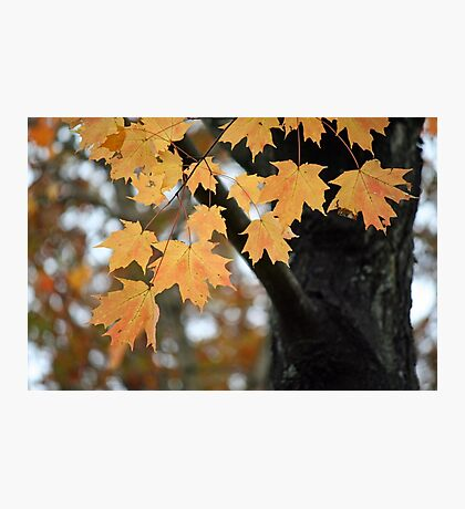 Hanging on to Autumn Photographic Print