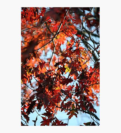 Okay, its Oak Photographic Print