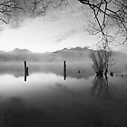 The Old Jetty, Kinloch NZ as a monochrome by Odille Esmonde-Morgan