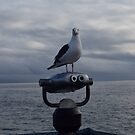 Seagull stare by Laurynsworld