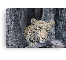 Young female leopard Canvas Print