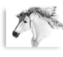 Stallions Mane Canvas Print