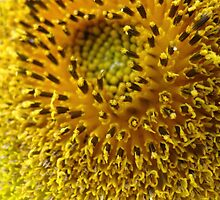 Sticky Sunflower by MarianBendeth