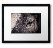 Look Into My Eyes - Horse Detail Framed Print
