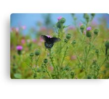 Playful butterfly  Canvas Print