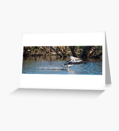 Pelican Water Landing Greeting Card