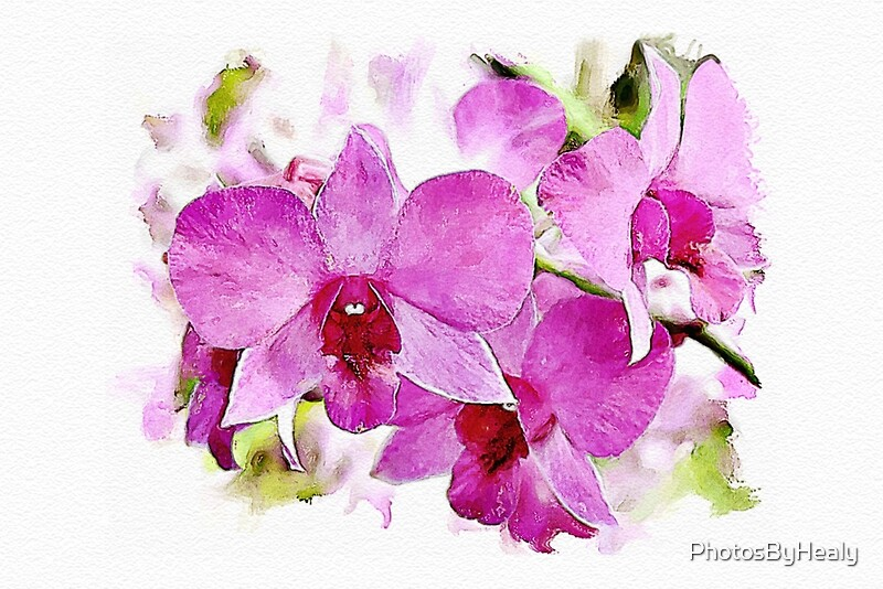 Pink Phalaenopsis - watercolour