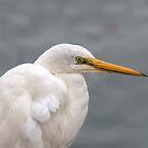Great Egret by John Sharp