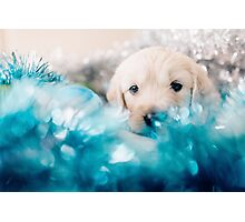 Golden retriever Christmas puppy Photographic Print