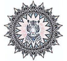 White Tiger Sapphire and Rose Mandala Photographic Print