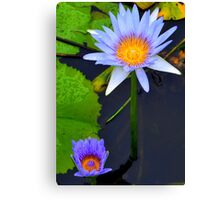 Waterlilies on the Lagoon Canvas Print