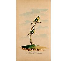 Lord's Entire new system of ornithology, or, Oecumenical history of British birds 6 Photographic Print