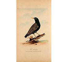 Lord's Entire new system of ornithology, or, Oecumenical history of British birds 7, Photographic Print