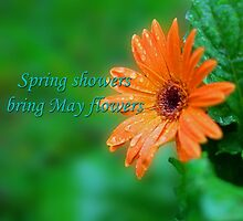 Spring showers by Dipali S