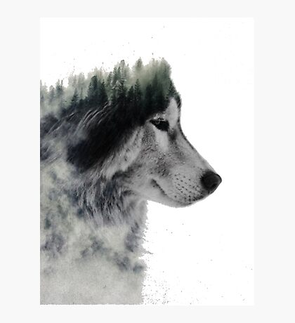 loup nature Photographic Print
