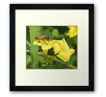 Bee on Flowers Framed Print