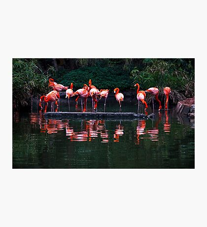 Pink Pelicans  Photographic Print