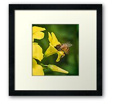 Face Full of Pollen Framed Print