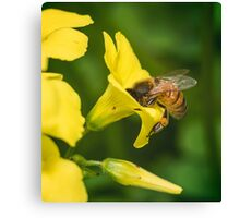 Face Full of Pollen Canvas Print