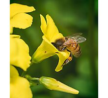Face Full of Pollen Photographic Print