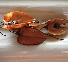 still life of seed pods by Janine Paris