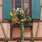 Window and Colorful Plants by Yair Karelic