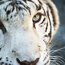 White Tiger by Doty