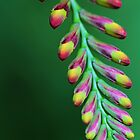Buds by Dipali S
