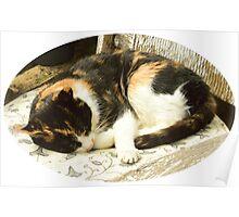 Sleeping Cat. Poster