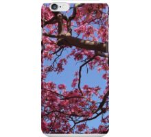Pink Blossoms, Tabebuia Tree iPhone Case/Skin