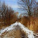 Winter walk by annalisa bianchetti