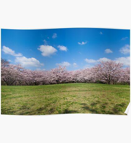 Cherry Field Poster