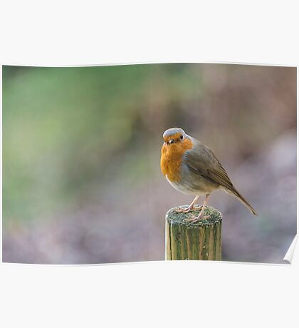 Robin Red Breast Sitting On A Fence Post Poster