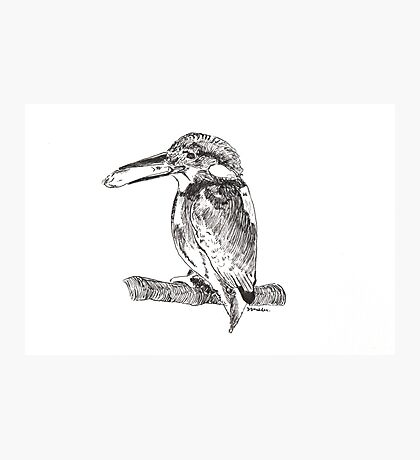 Pen and Ink Kingfisher Photographic Print