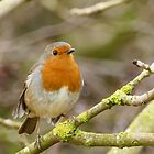 Red, Red Robin by jesika