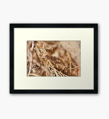 cute gecko Framed Print