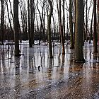 Iced Pond by Debbie Oppermann