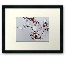 Berry Bliss Framed Print
