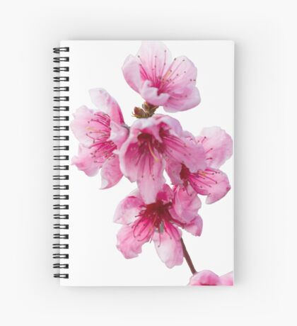 isolated peach blossom Spiral Notebook