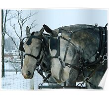 Amish Work Horses Poster