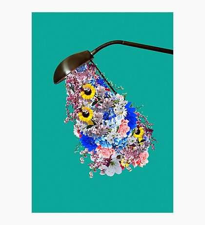 Light is needed to grow flowers Photographic Print