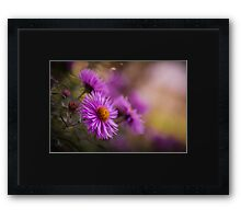 Purple Asters in Autumn Framed Print