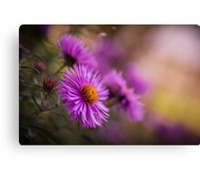 Purple Asters in Autumn Canvas Print